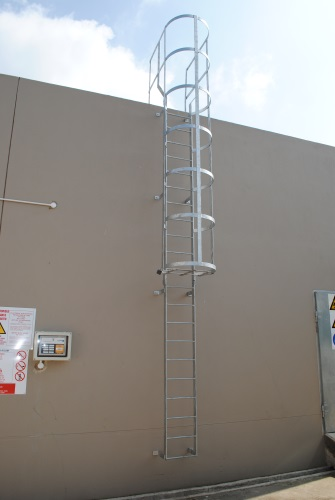 Cat ladder with rungs